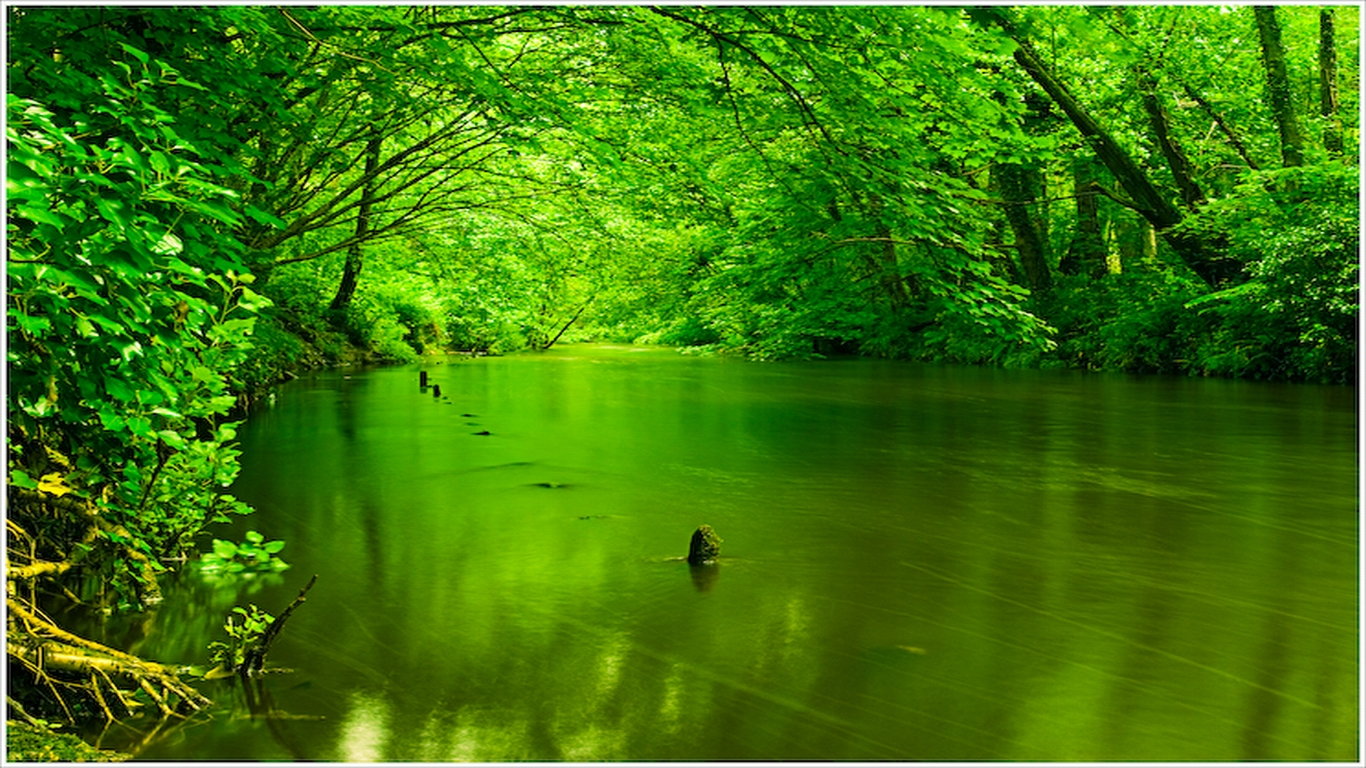 Free Download Green Nature Wallpaper Sf Wallpaper 1366x768