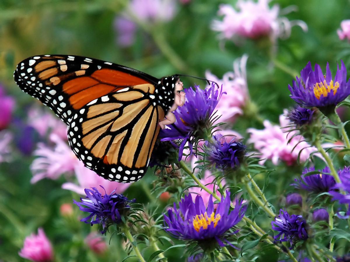 butterfly photos backgrounds wallpaper butterfly wallpapers desktop 1200x900