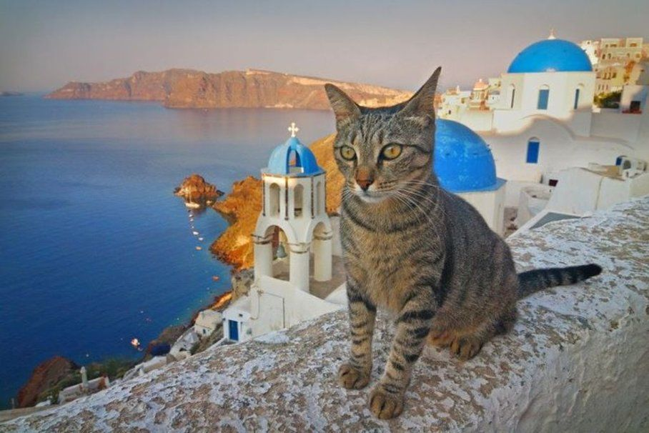 Pin by   on Cats Greece Exotic cats 908x606