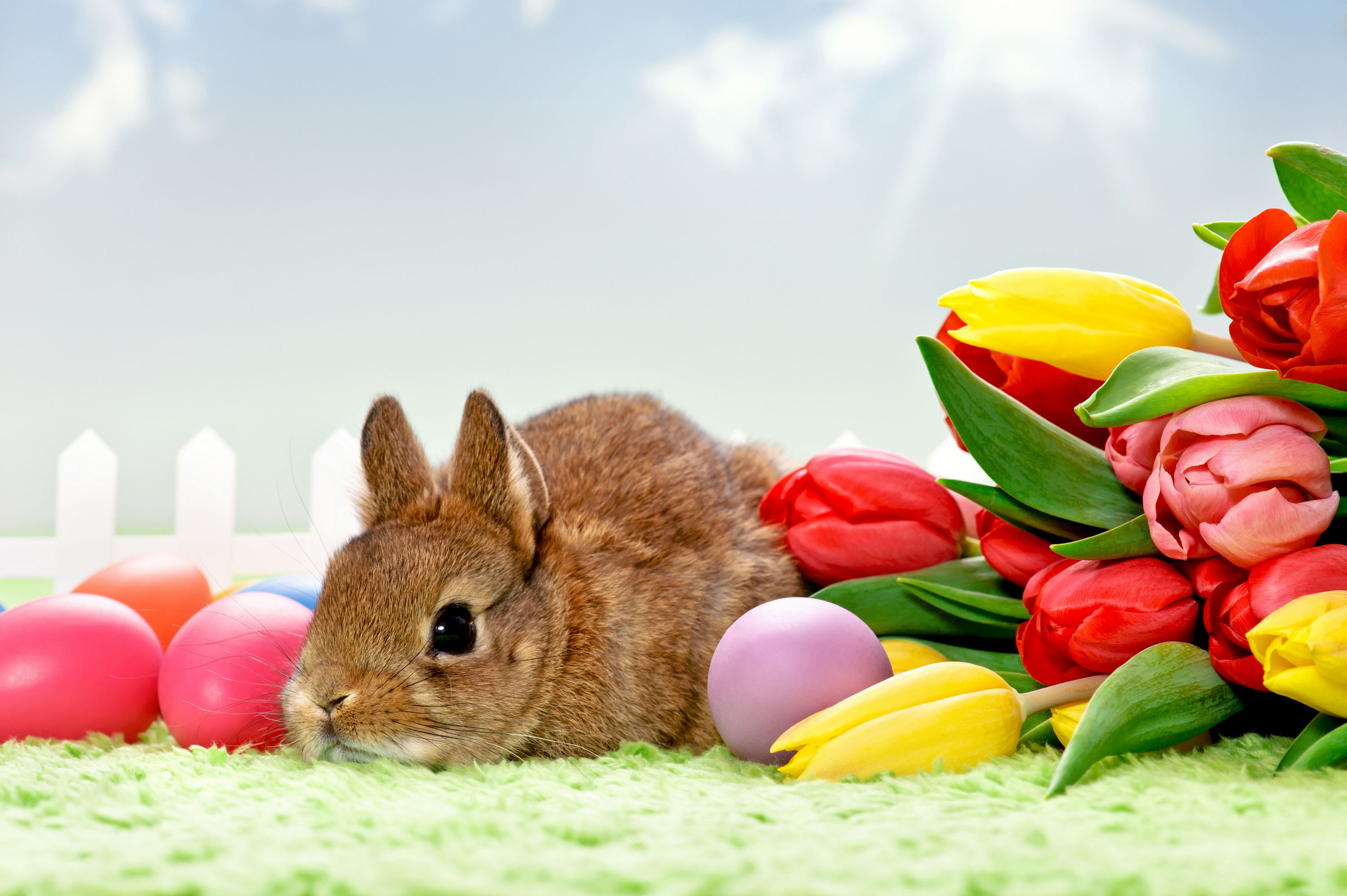 Easter Bunny Full HD Wallpaper and Background Image 3000x1996
