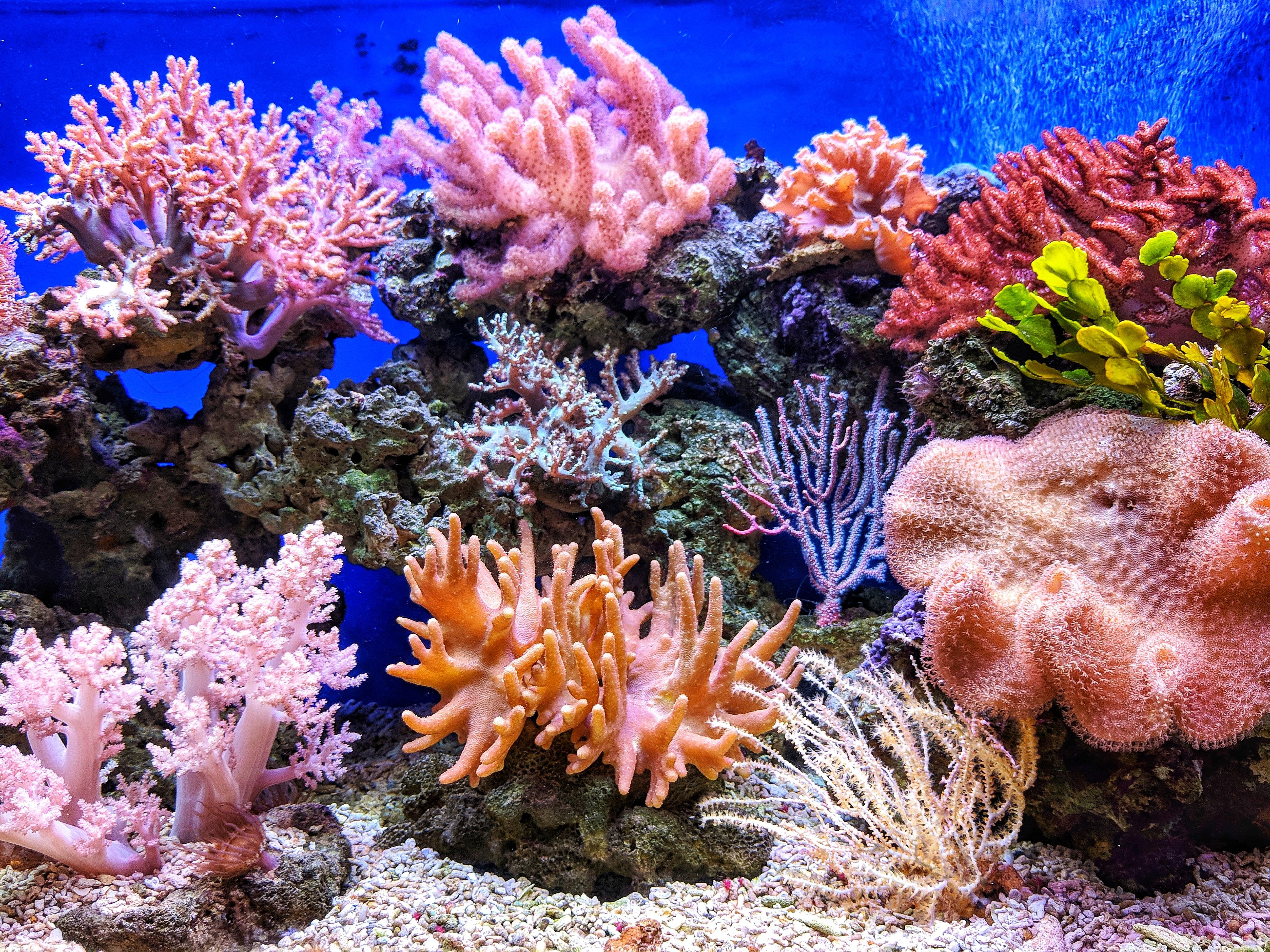 Free download 900 Aquarium Background Images Download HD ...  Printable Aquarium Background