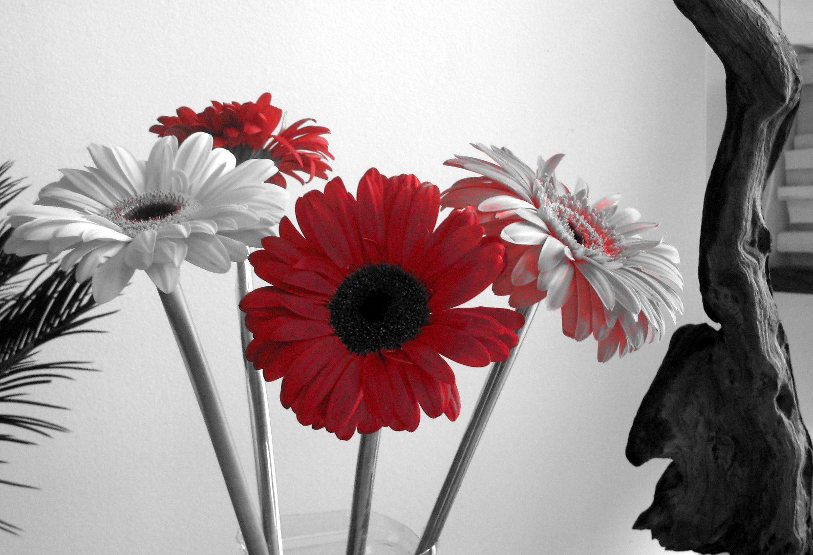 Black White And Red Wallpaper Wallpapersafari