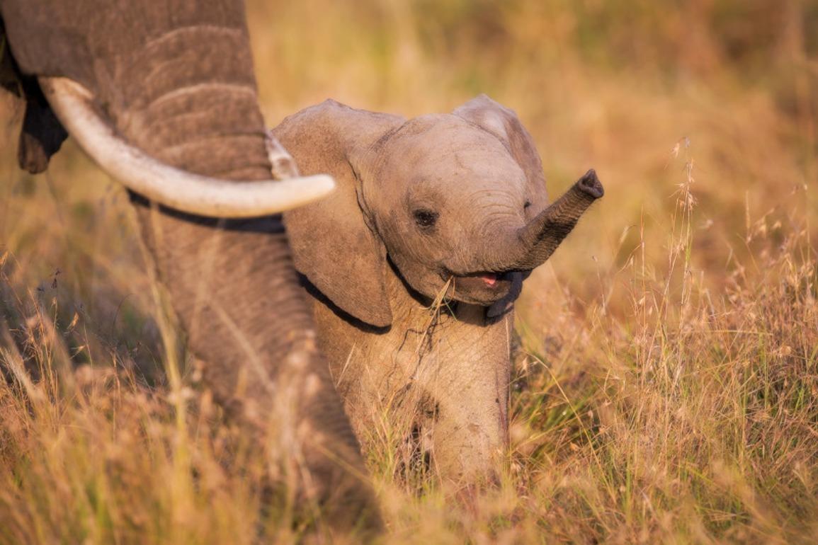70 baby elephant wallpaper on wallpapersafari - Baby elephant wallpaper ...