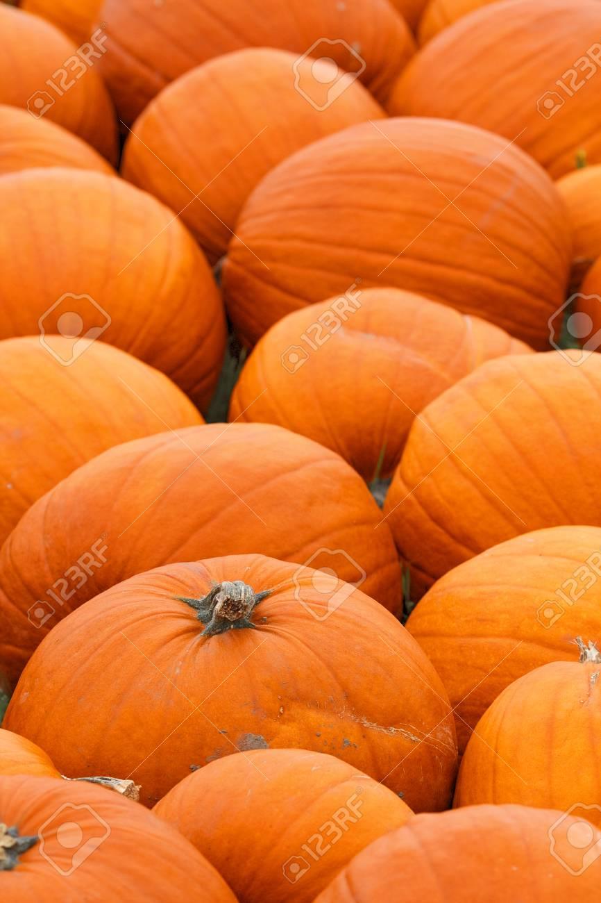 Fresh Harvest Heap Of Farm Pumpkins Halloween And Thanksgiving 866x1300
