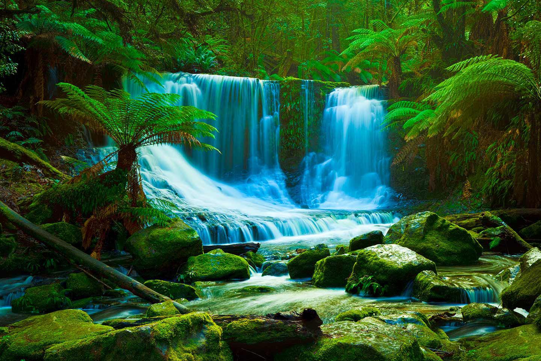 rainforest backgrounds wallpapersafari
