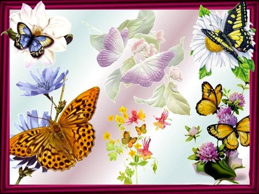 best HD Butterflies And Flowers wallpapers Blog xy dng 1024x768