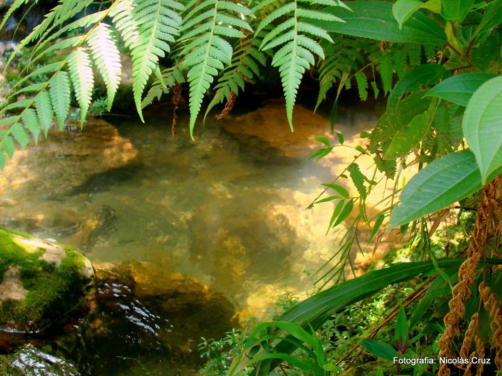 Naturaleza   Wallpaper by Nicolas Cruz Nicolas Crux Flickr 1024x768