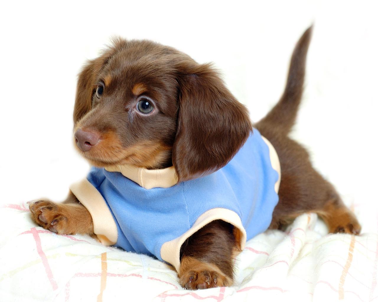 Puppies - Puppies Photo (29017067) - Fanpop