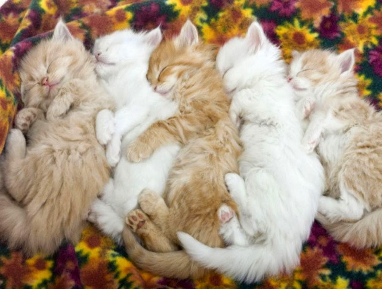 cute kitten wallpaper for desktop cute kitten wallpaper for desktop 1280x967