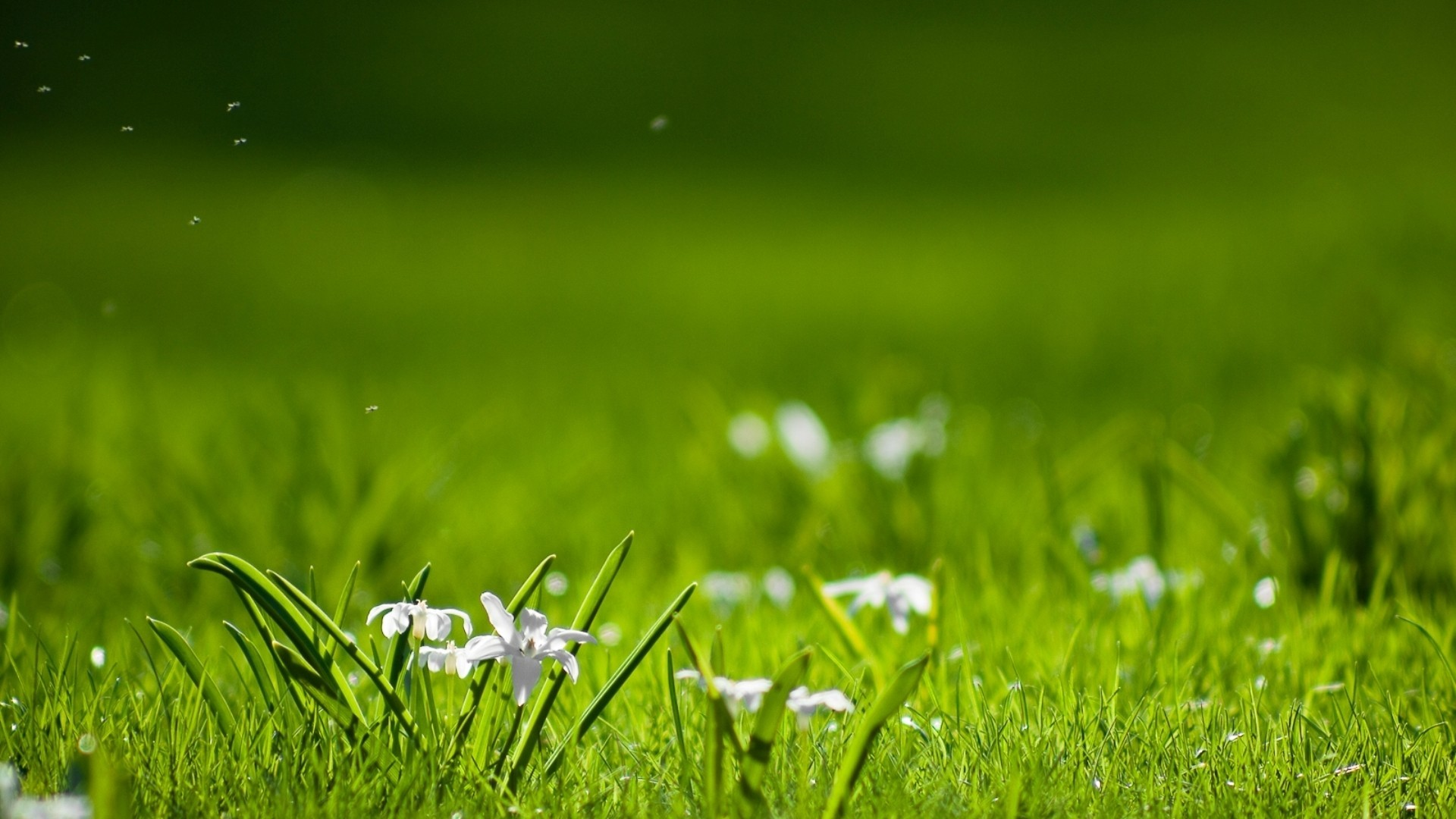 Green Grass Nature Background 4238651 1920x1080 All 1920x1080