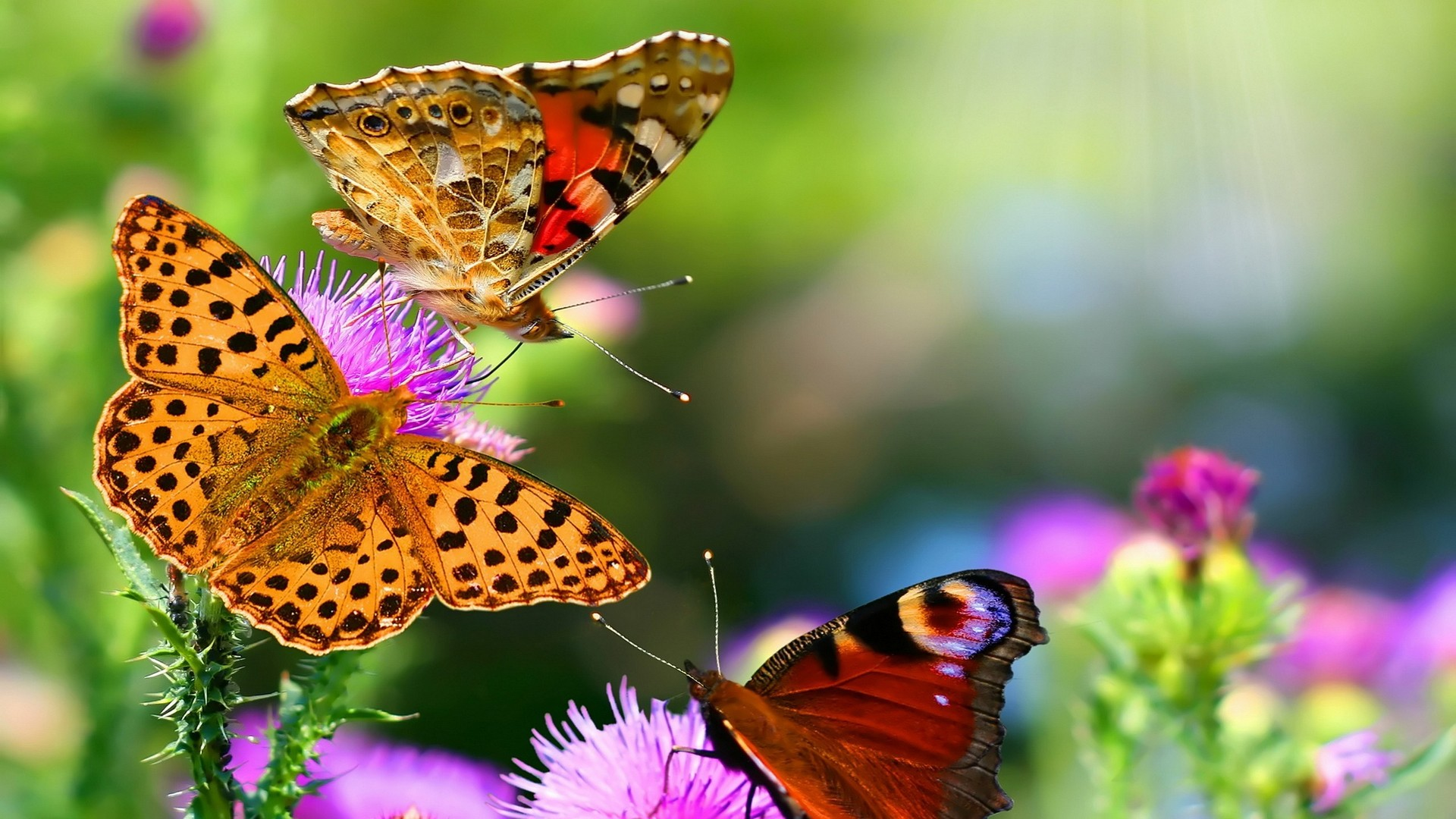 Nature Animals HD Wallpapers 2014 1920x1080