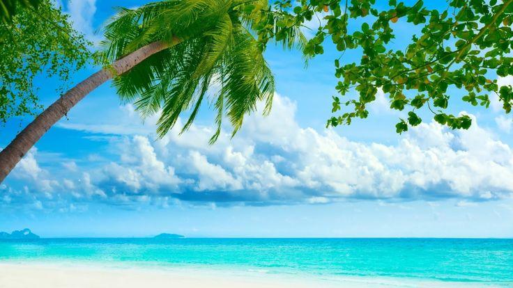 Tropical Beaches Tropical Beaches 736x414
