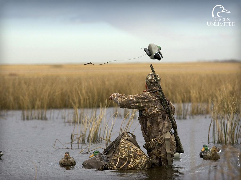 Duck Hunting 1024x768