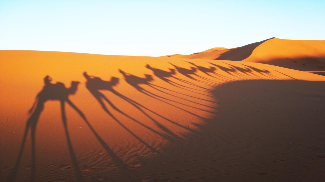 Free Download Camels Shadow In Sahara Desert Wallpaper