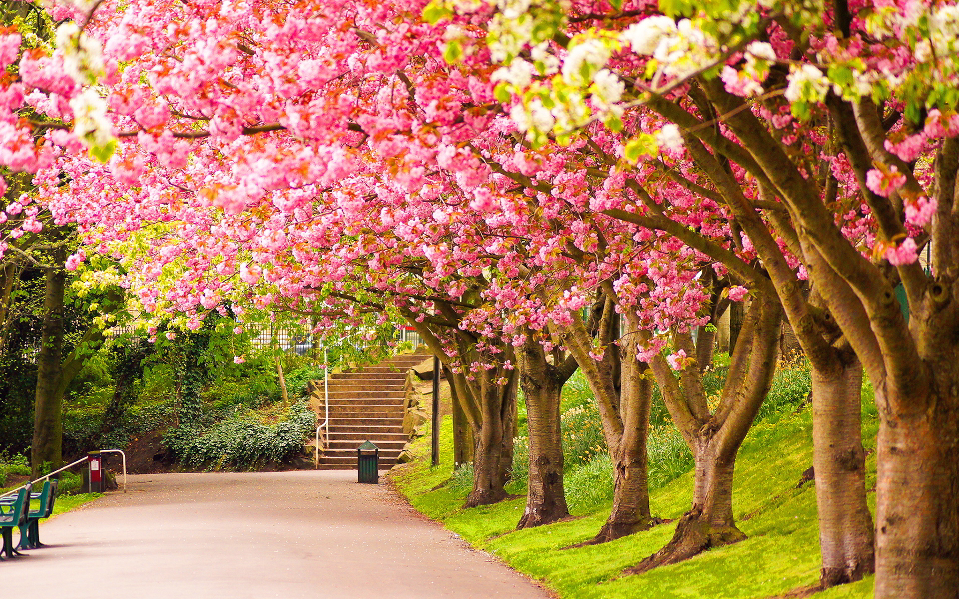 the spring wallpapers category of hd wallpapers wallpaper nature 1920x1200