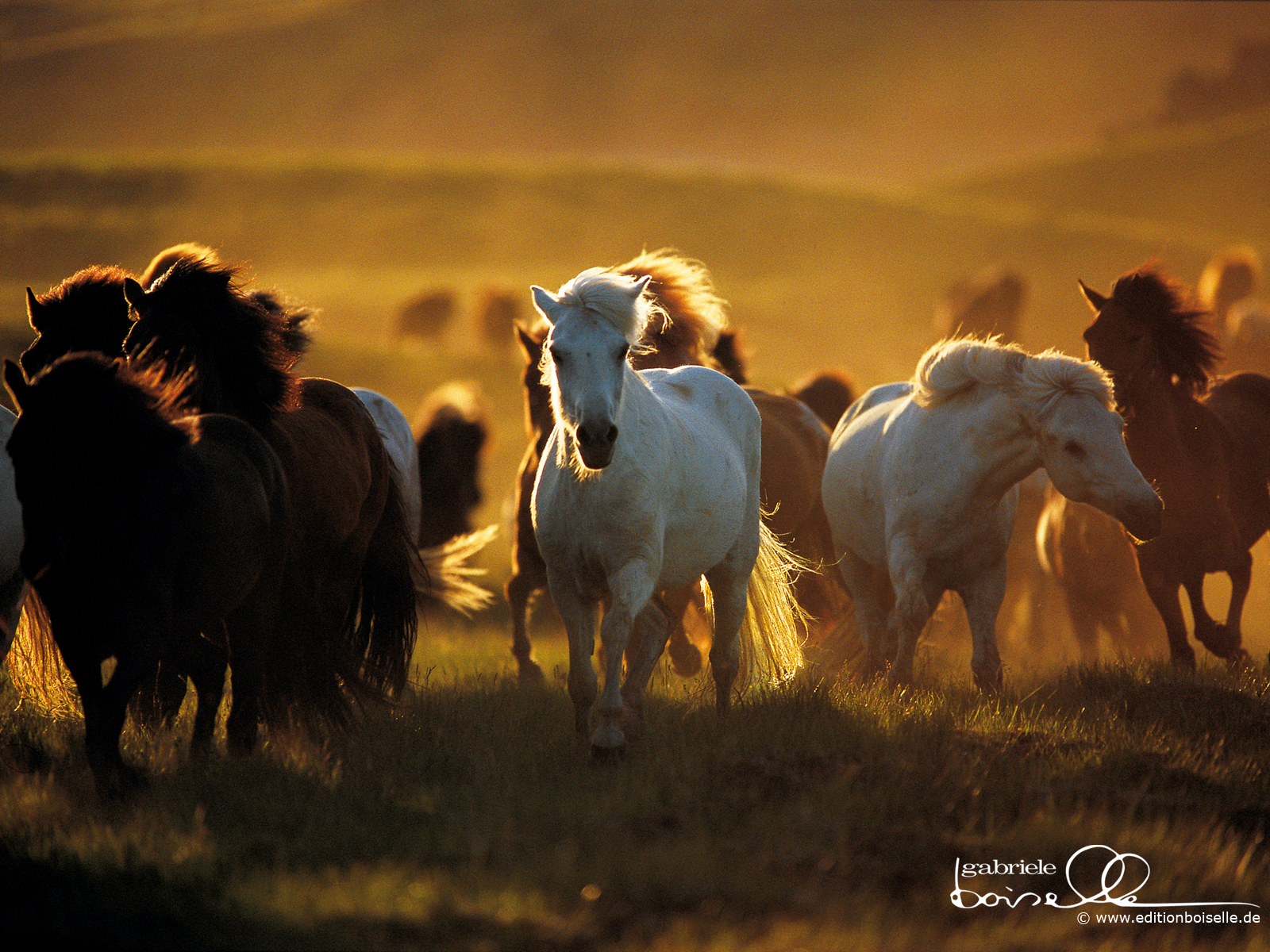 Horses images Horse Wallpaper HD wallpaper and background photos 1600x1200