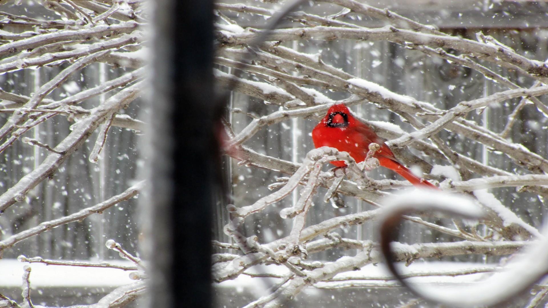 Widescreen Winter Bird Wallpaper