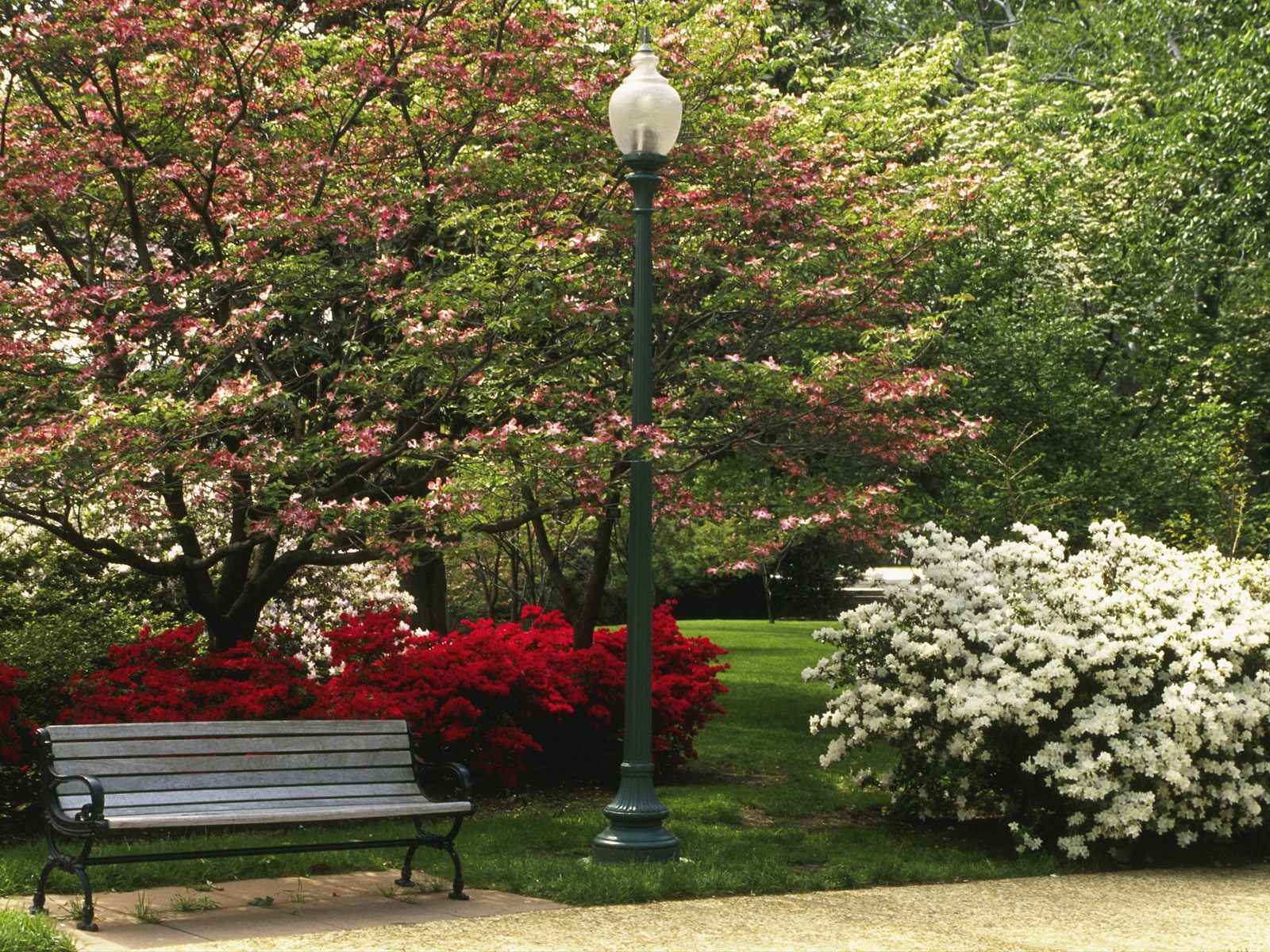 Central Park in Spring Season   Wallpaper 31396 1600x1200