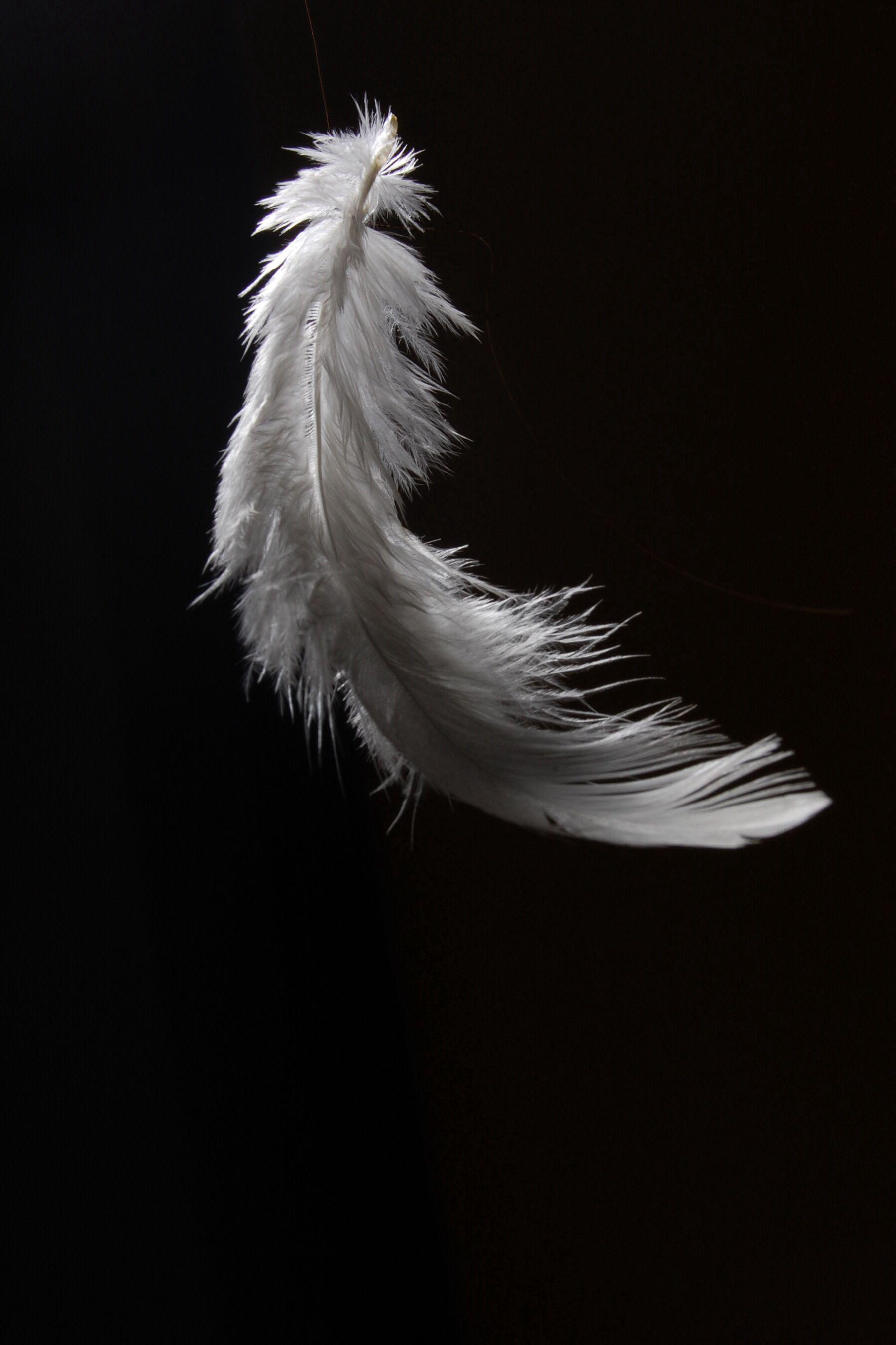 White Feather zwarte achtergrond 18003 achtergronden CamLib 1800x2700