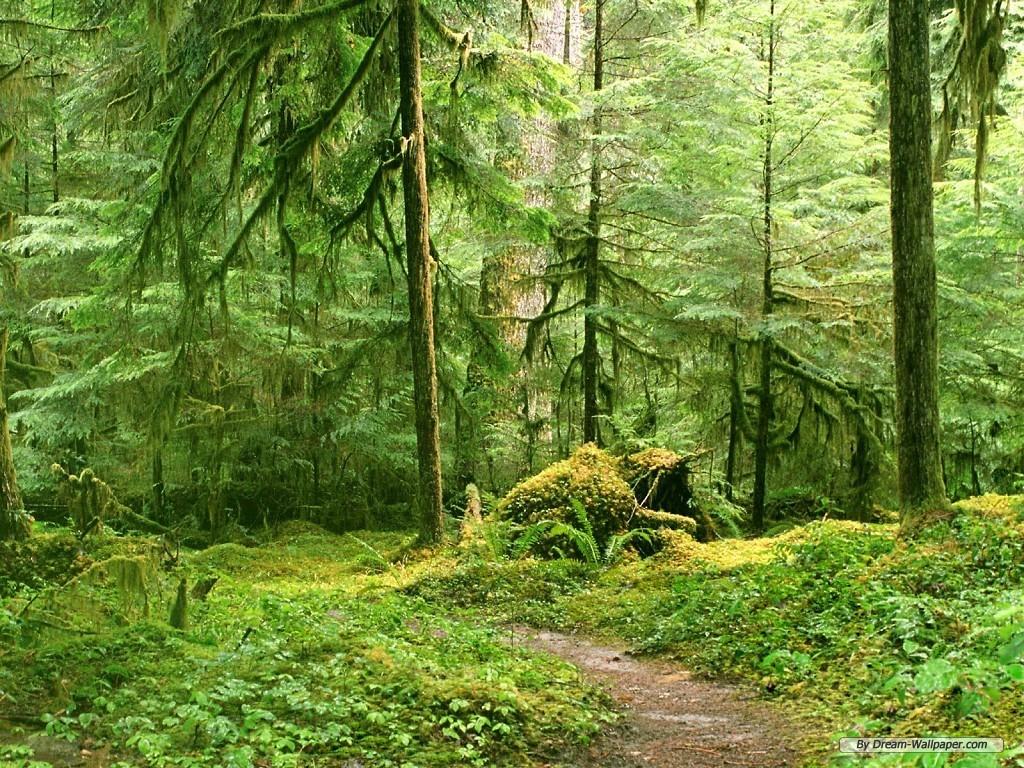 wallpaper   Forest Landscape wallpaper   1024x768 wallpaper   Index 9 1024x768
