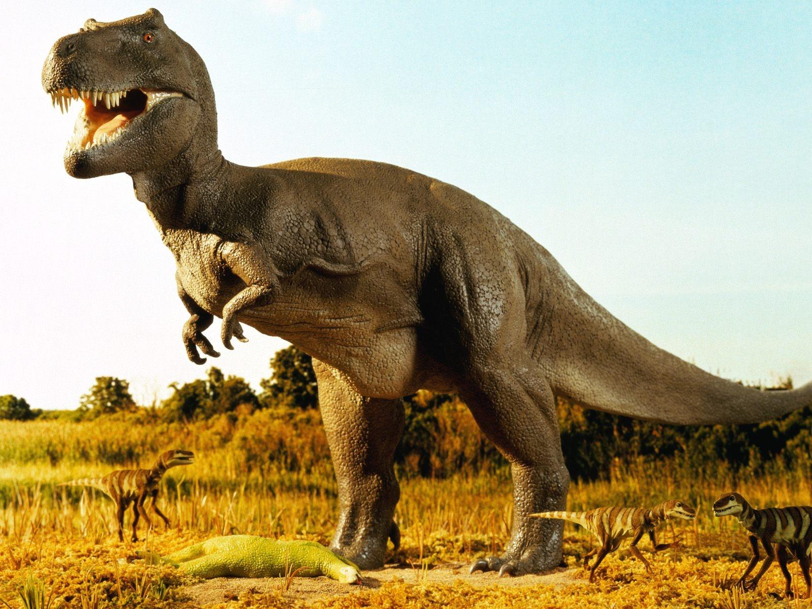 Amazing Dinosaur HD Desktop Wallpapers   Download Desktop 1600x1200