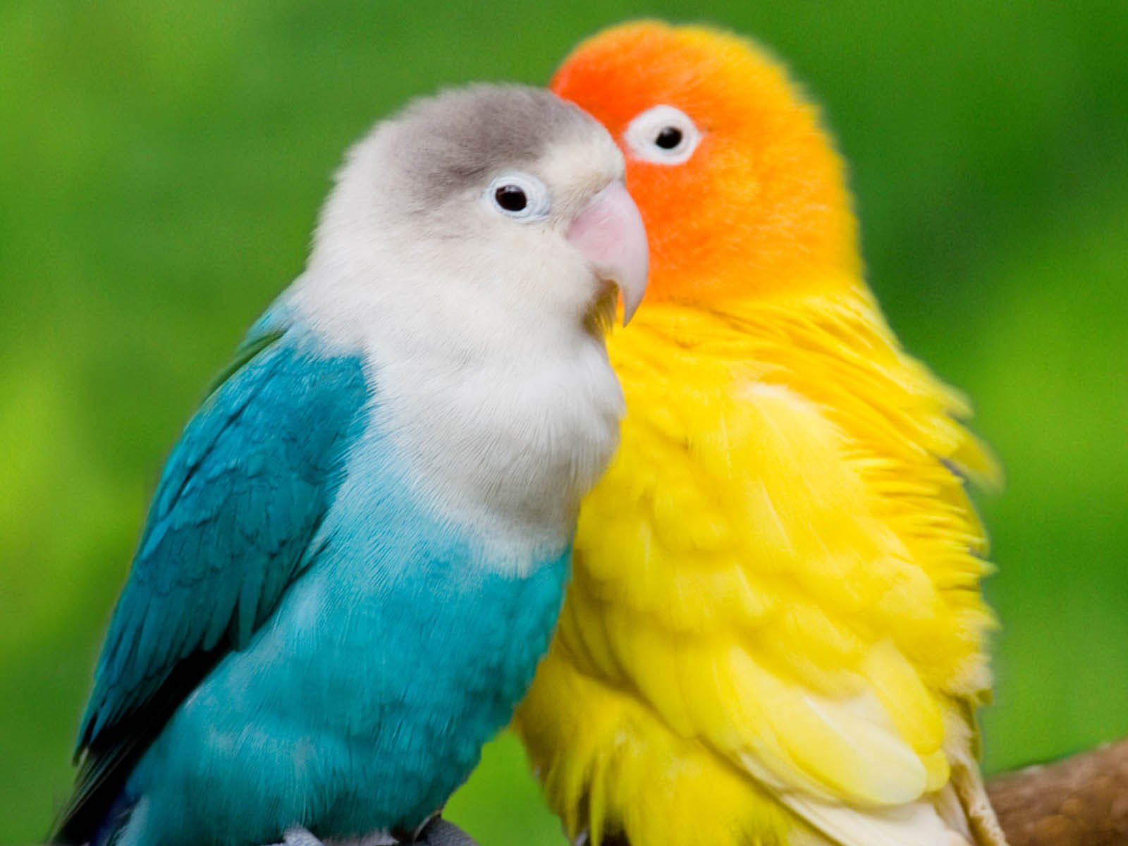 Desktop Wallpapers Colourful Parrots Desktop Wallpapers 1600x1200
