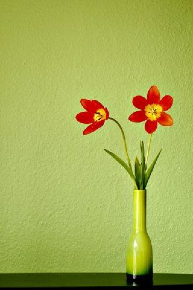 Flower Pot Wallpaper Wallpapersafari