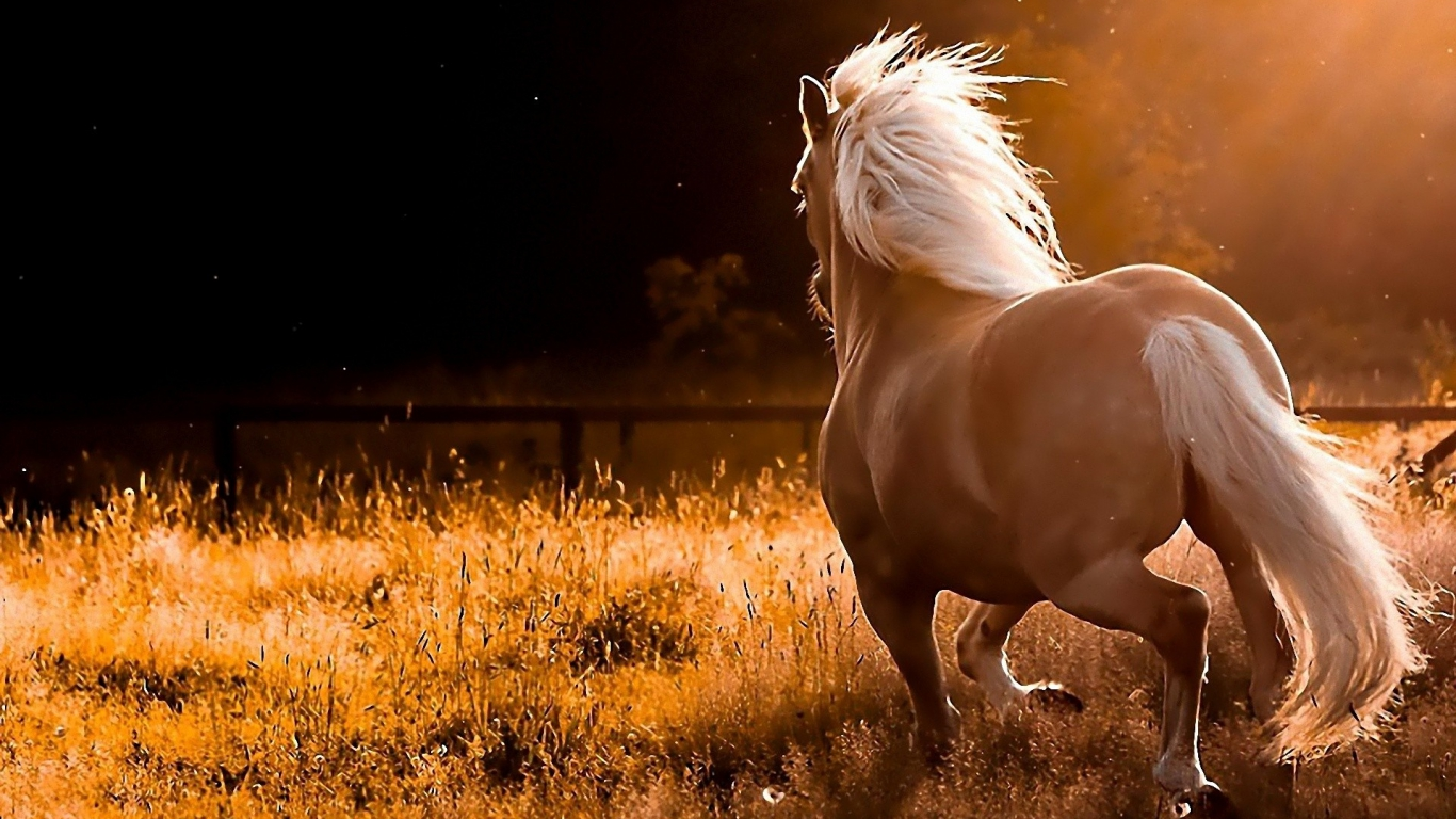 Beautiful Wallpapers wild horses wallpapers 1366x768