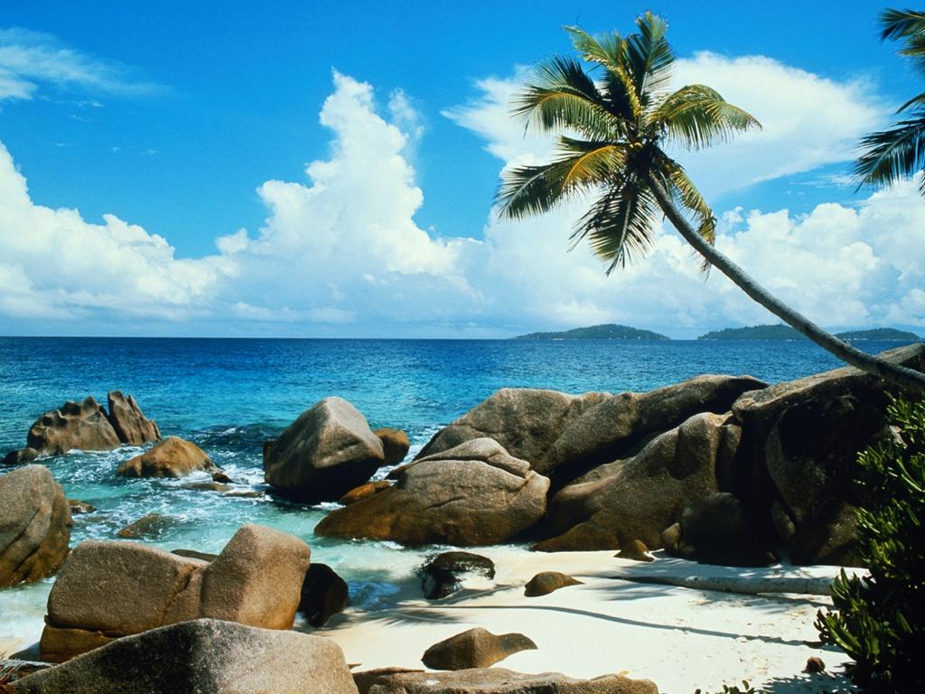 Beach palm tree wallpapers Beach palm tree stock photos 1024x768