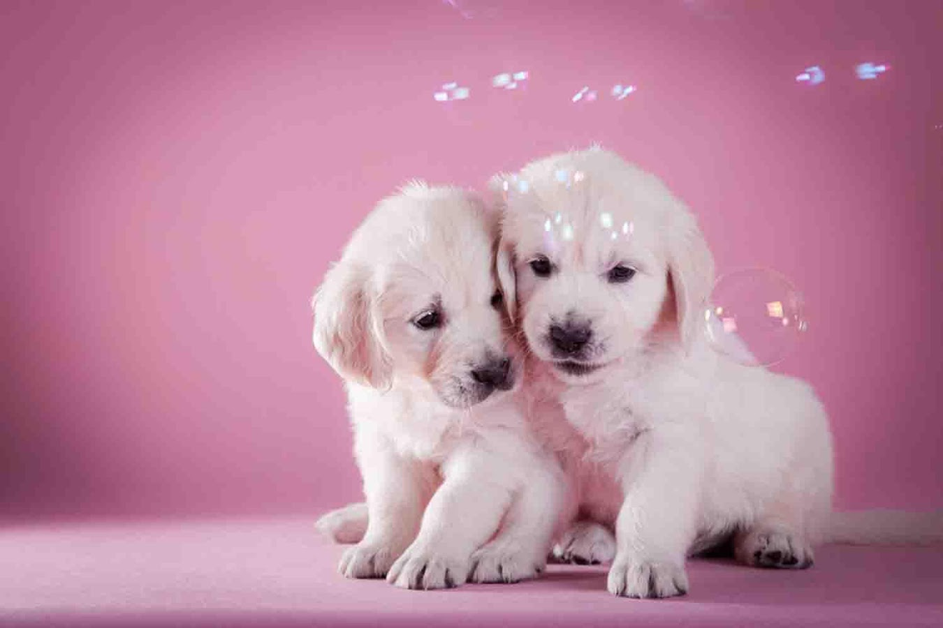 Cute Puppy Backgrounds Android Apps on Google Play 1350x900