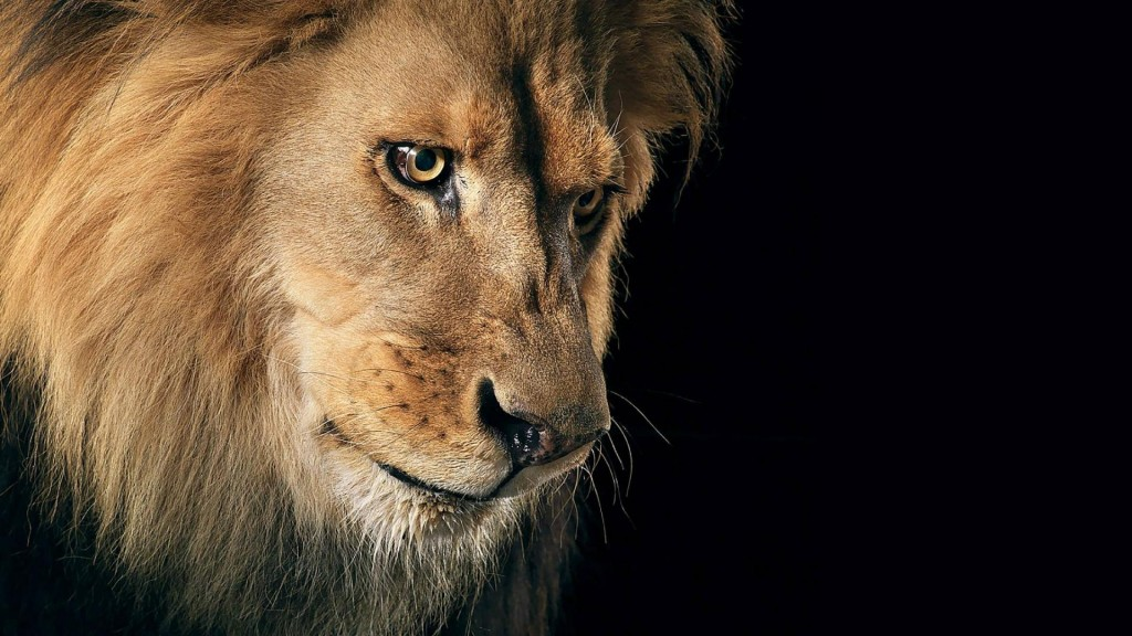 Lion Wallpaper HD 1080p Wallpaper HD 1080p 1024x576