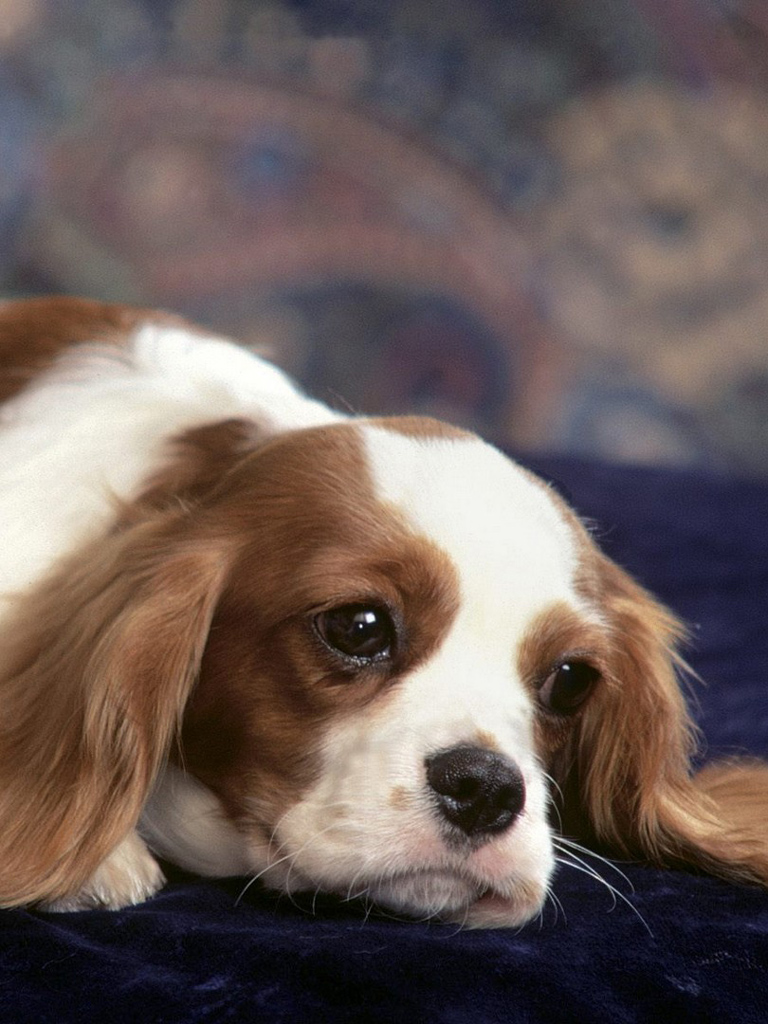 Puppy Wallpapers For Phone   Cute Dog Mobile Wallpaper Hd 768x1024