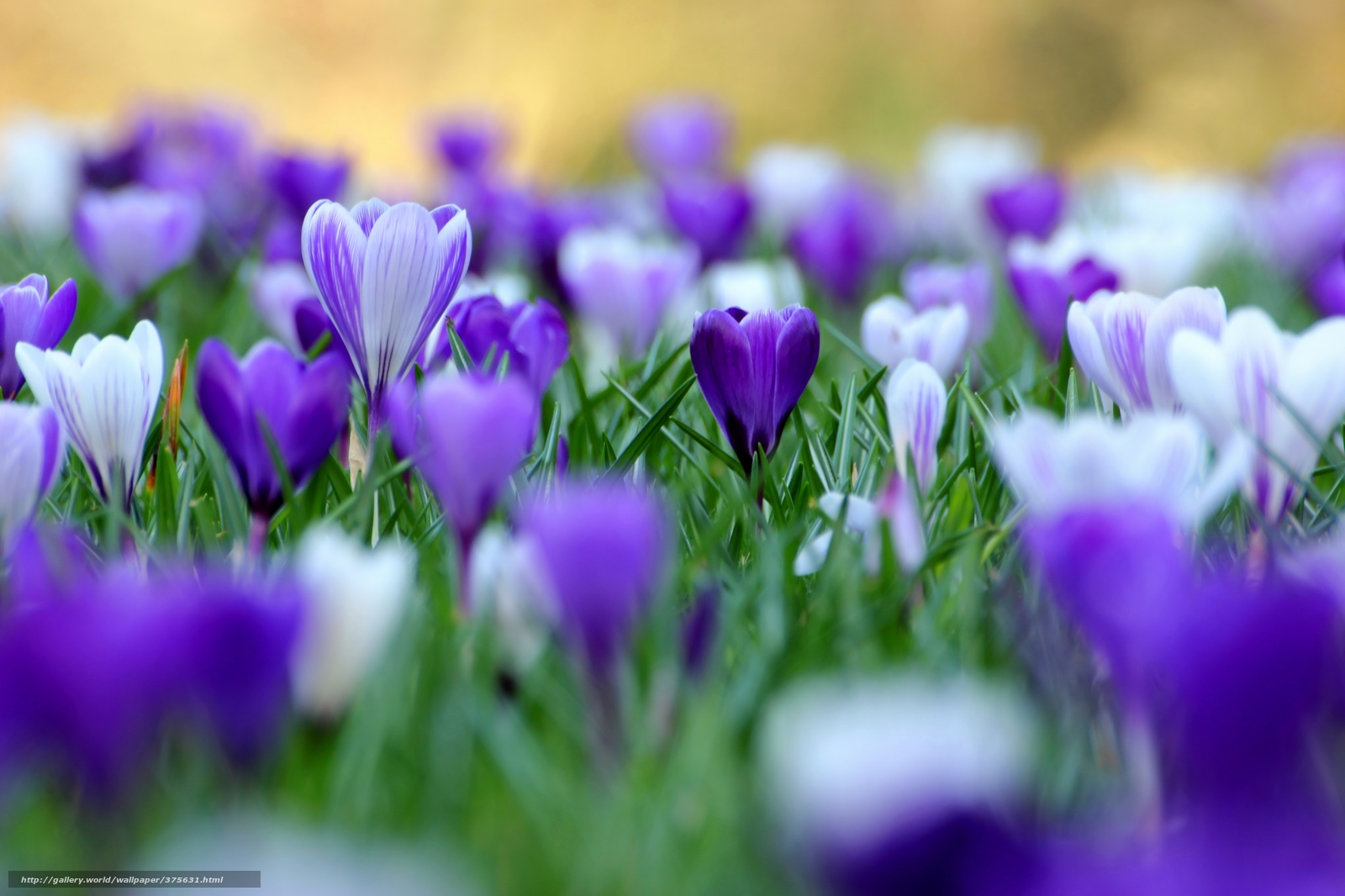 wwwwallpapers in hdcomphotofree spring desktop wallpaper13html 1600x1066