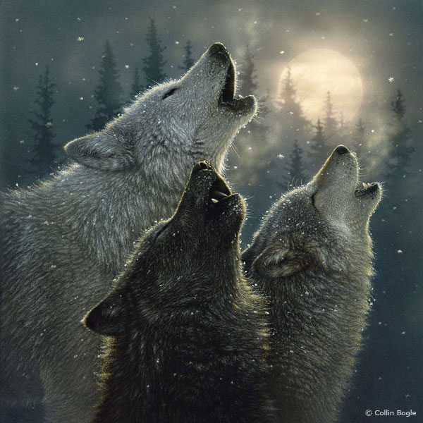 Wolf Paintings Wolf Art Prints Wolves Painting Artist 600x600