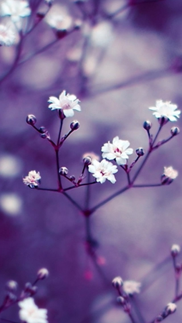 Nature Flowers Macro iPhone 5s Wallpaper Download iPhone Wallpapers 640x1136