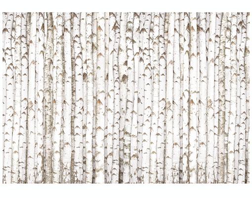 Wall Mural BIRCH WALL 400x280 Wallpaper Tree Forest Wood Trunk Pattern 510x400