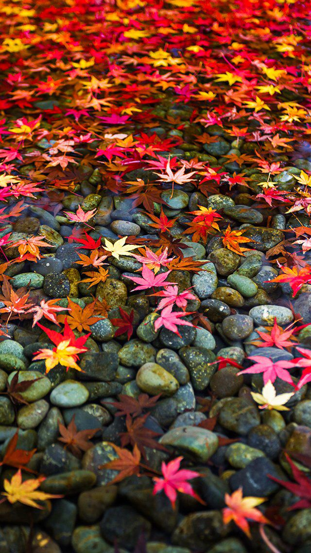 Fall Wallpaper Iphone 551183   Autumn Wallpapers For Mobile Hd 640x1136