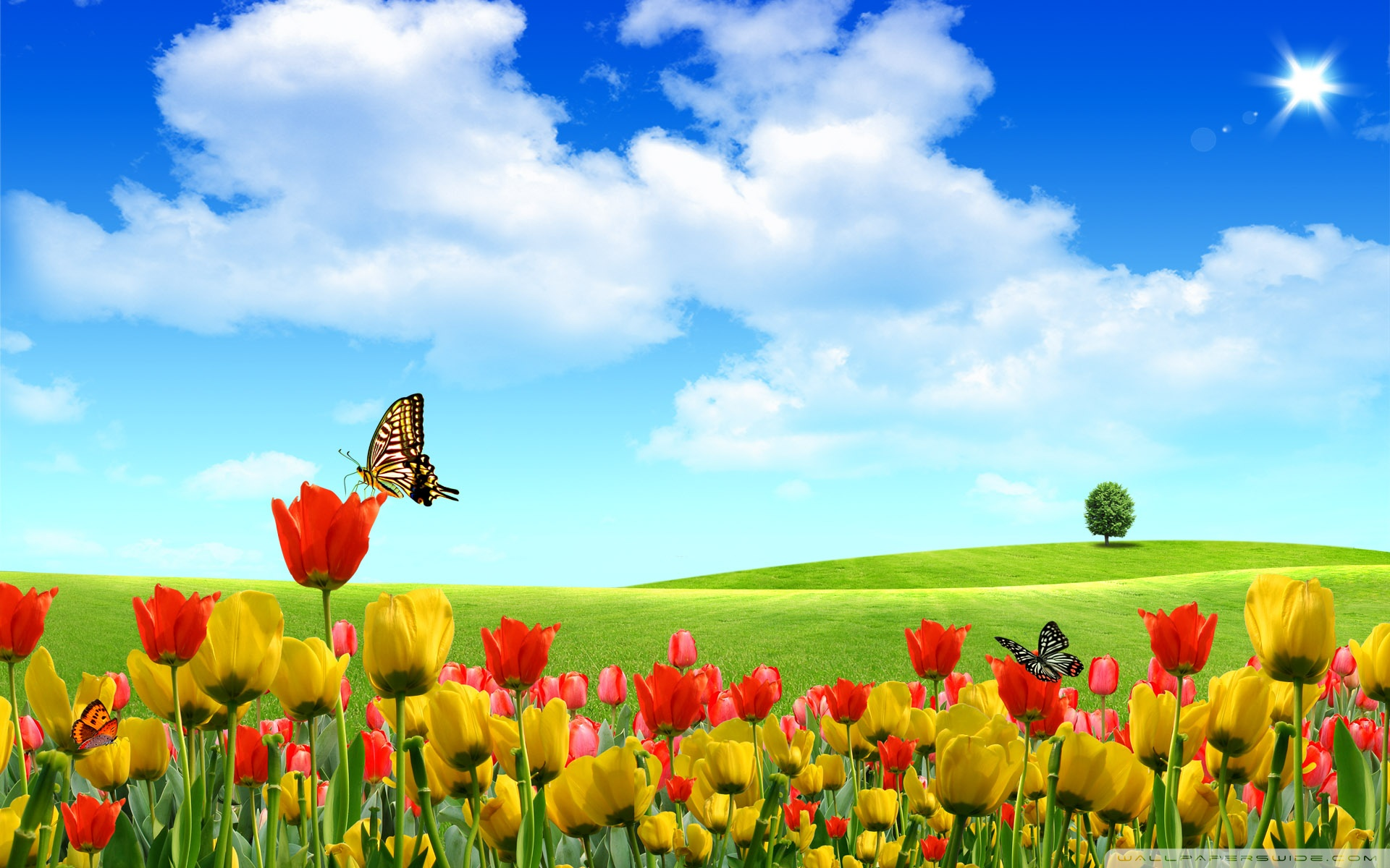 Hd wallpaper spring - Spring Spring Wallpaper Hd Spring Pictures Nature Backgrounds