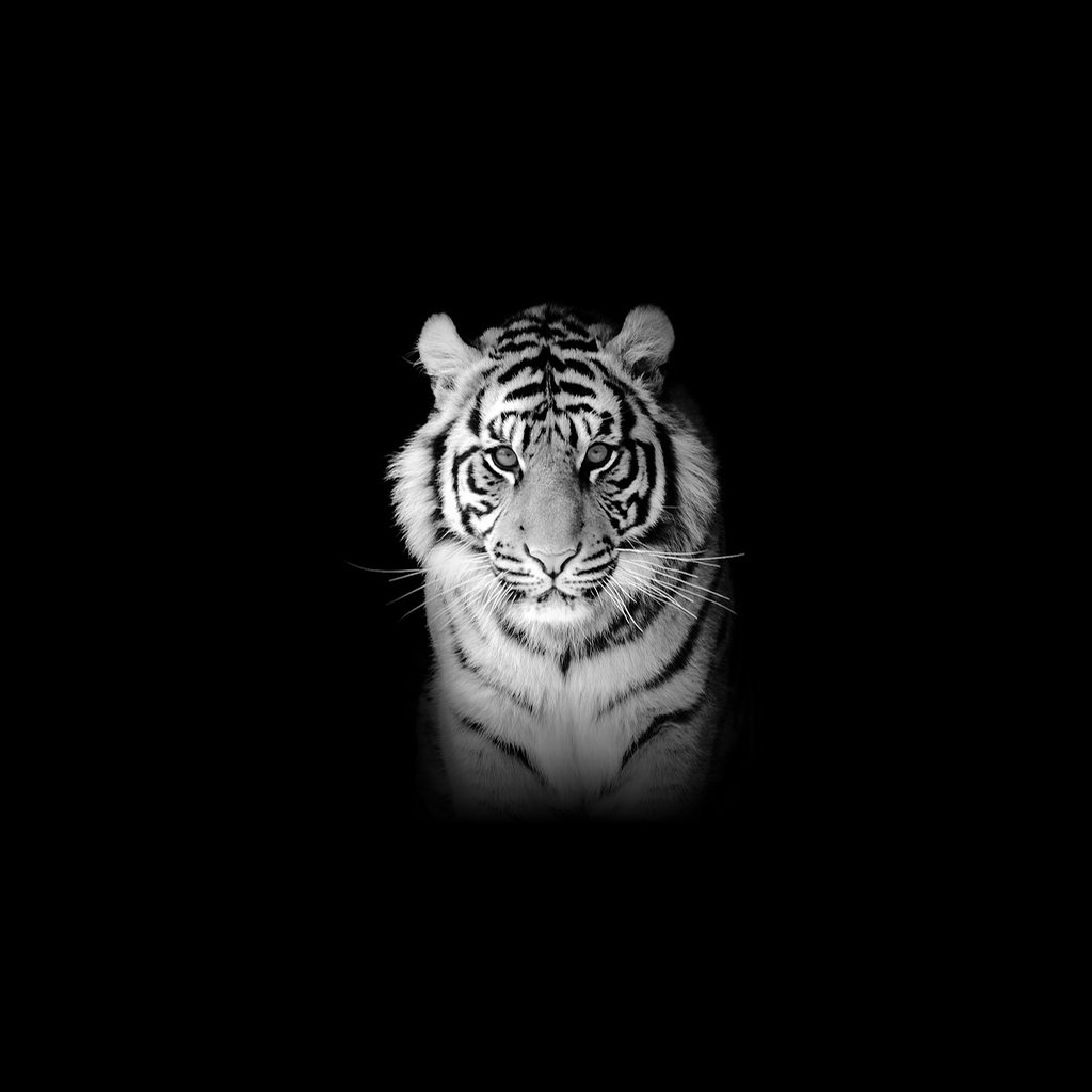 Tiger Wallpaper For IPad
