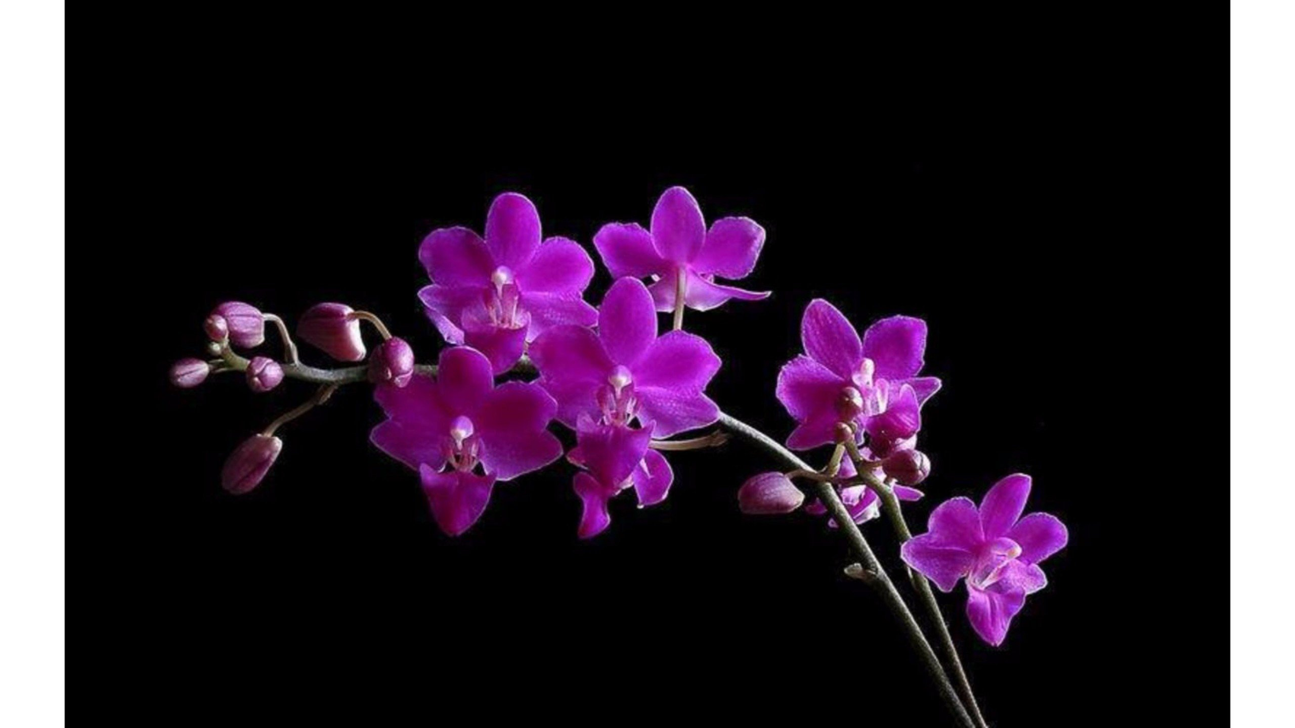 Orchids Wallpapers Pictures to pin 2560x1440