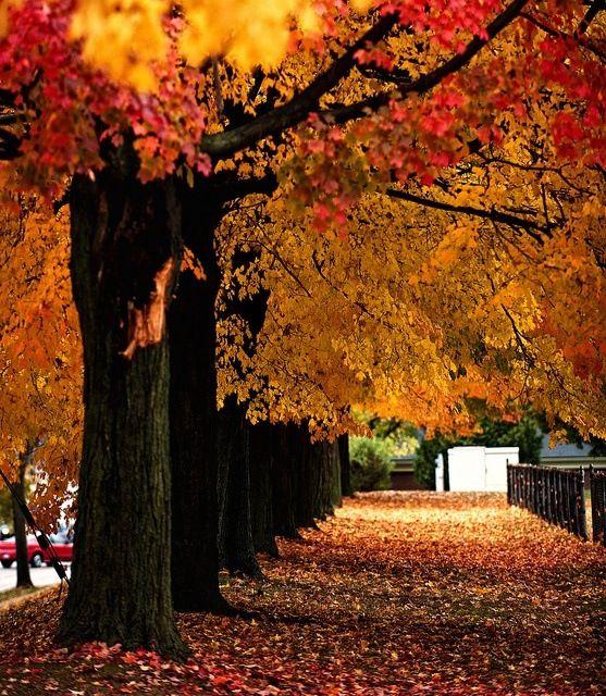 Fall leaves 557x640
