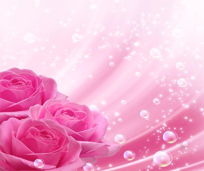 Photos Beautiful Pink Roses 680x570