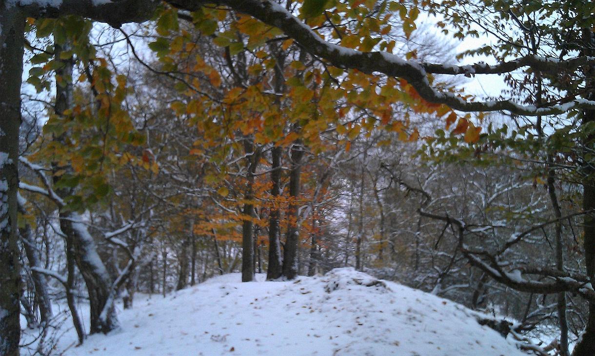 Early Winter 03 by xmas kitty on deviantART 1220x730