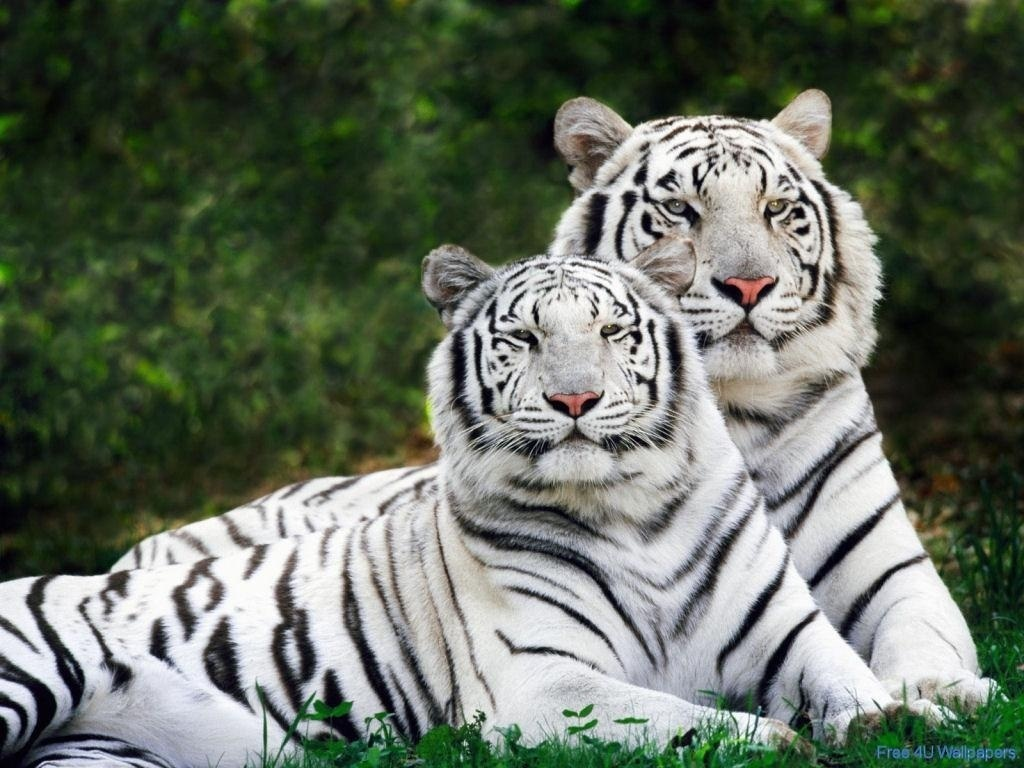HD Animals wild animals wallpapers 1024x768