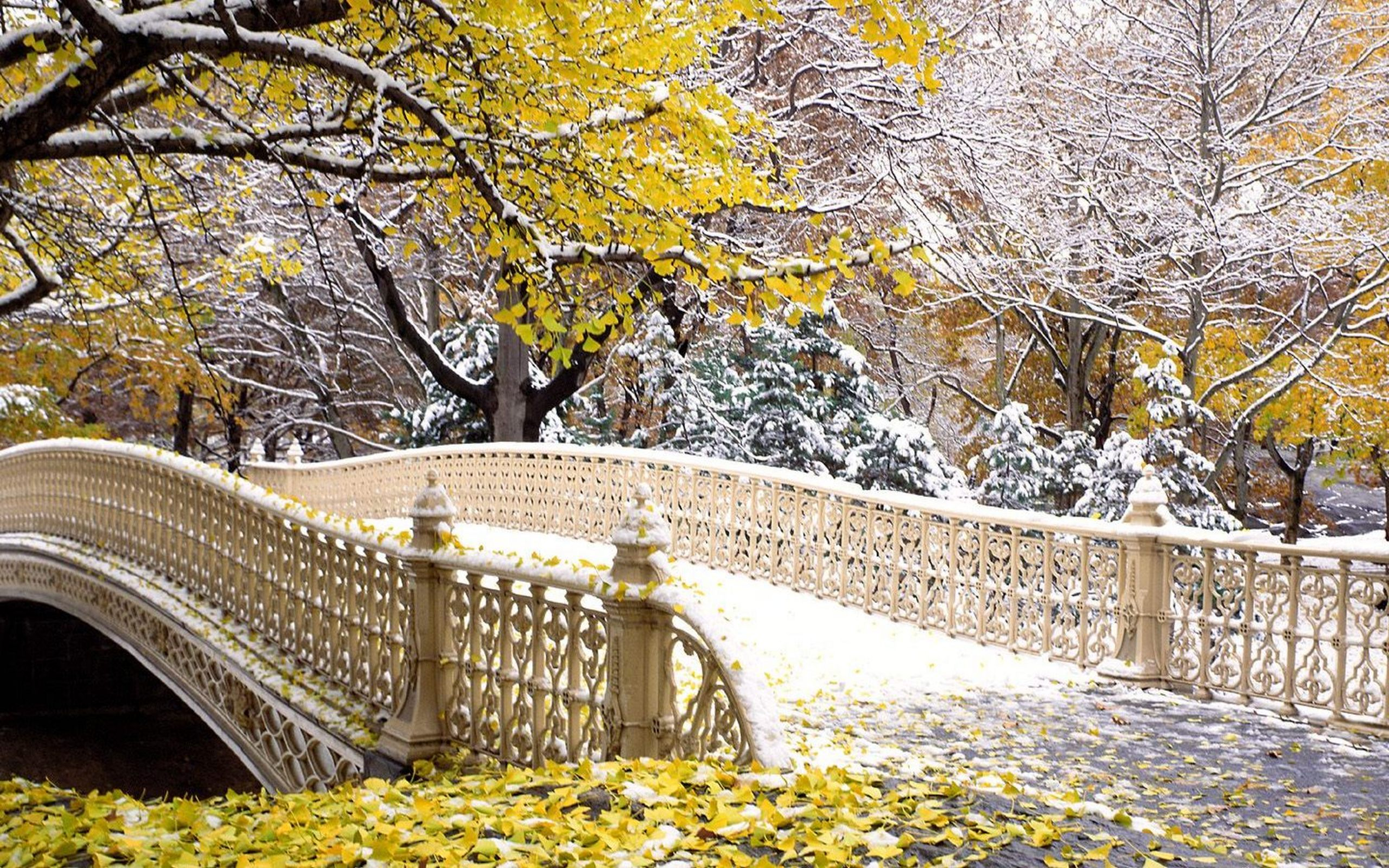 Fall Central Park New York Wallpapers HD Wallpapers 2560x1600