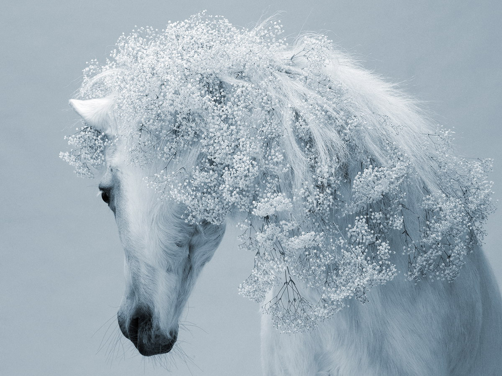 Free Download Winter Horse Desktop Wallpapers 1152x864