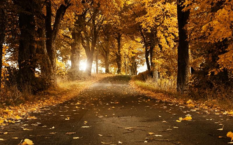 Download Wallpaper Autumn in Sweden Desktop wallpapers and photos 800x500