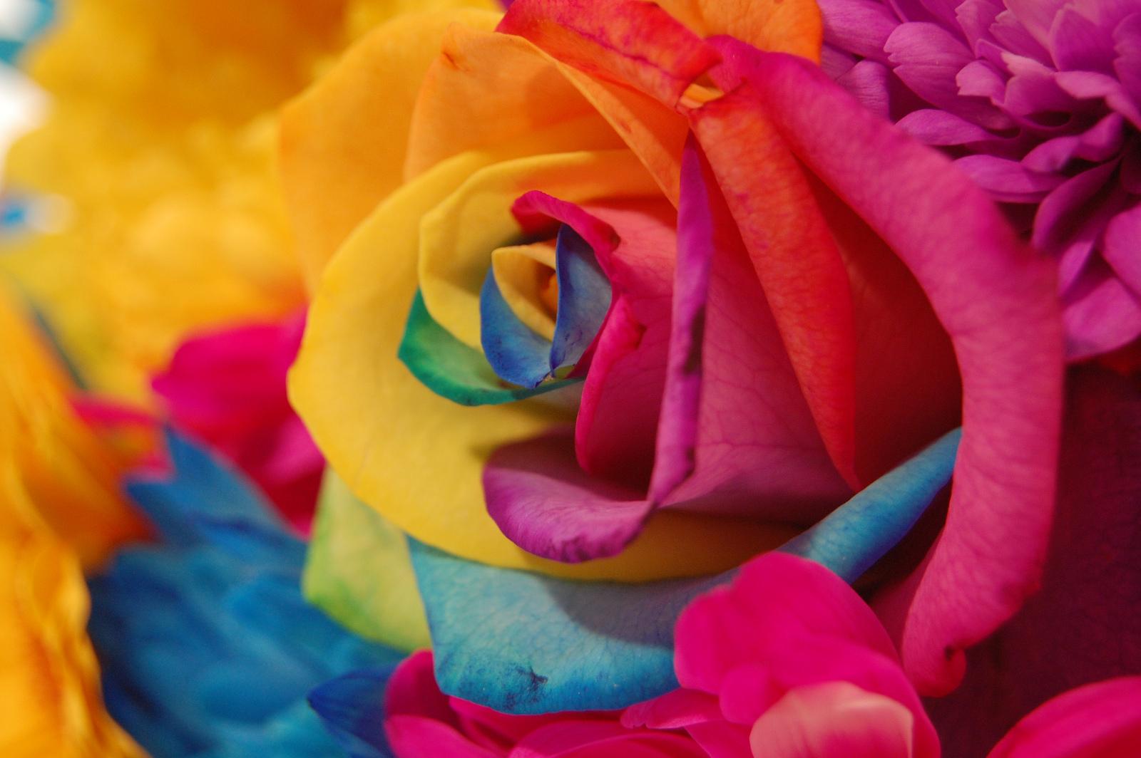 Радуга цветов в фото