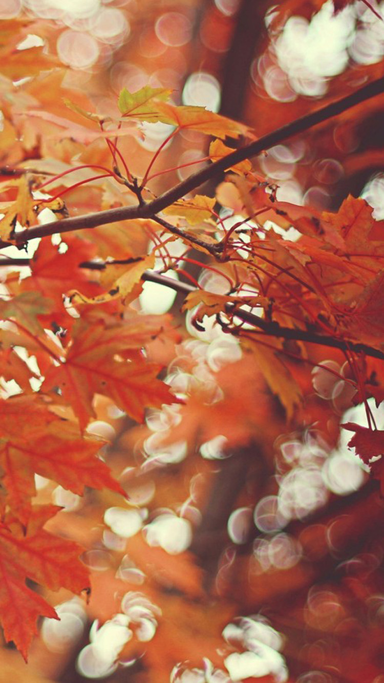 autumn maple leaves iPhone 6 Wallpaper HD iPhone 6 Wallpaper 750x1334