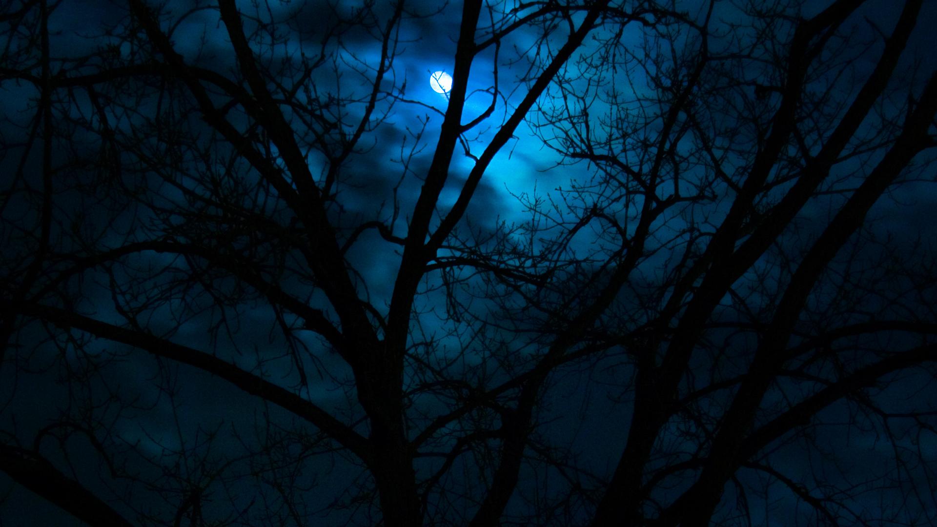 Beautiful Dark Scenery Moon In Forest 1920x1080